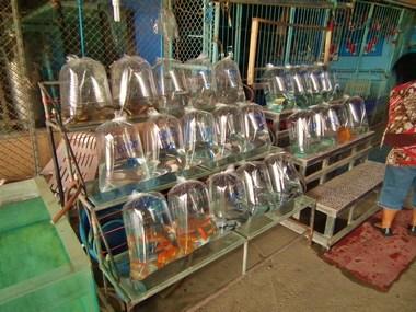 www.thai-dk.dk/penfoto/1/DSCF7696.jpg
