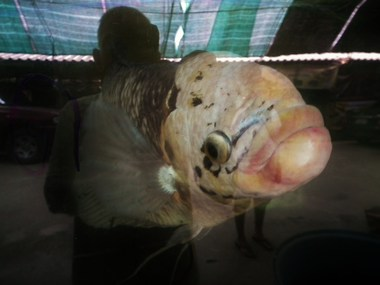 www.thai-dk.dk/penfoto/1/DSCF7713.jpg