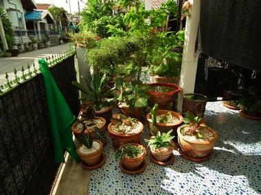 www.thai-dk.dk/uploads/DSCF7923.JPG