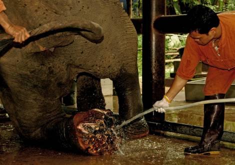 www.thai-dk.dk/uploads/Thailand_Elephant_.jpg