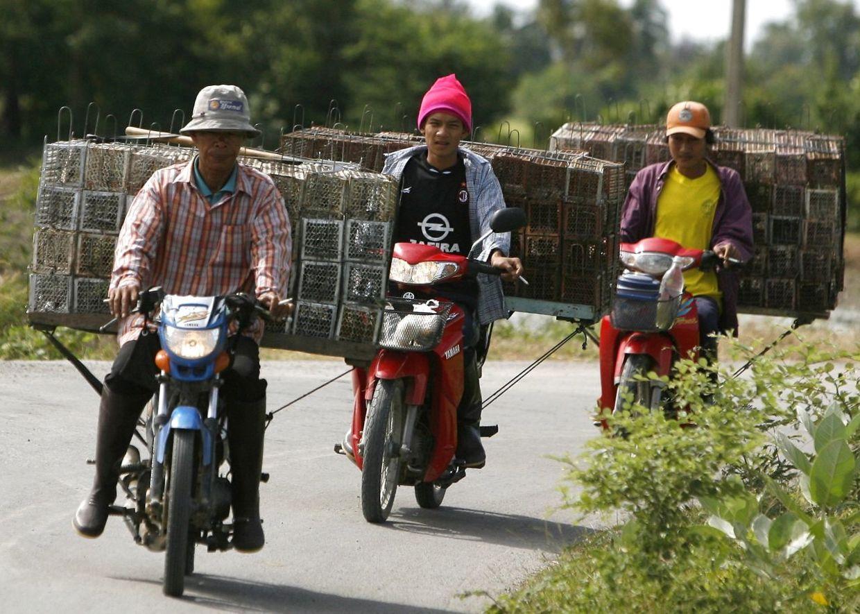 www.thai-dk.dk/uploads/23665846-t.jpg
