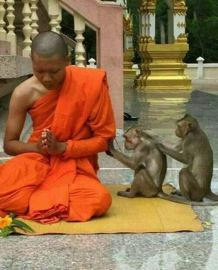 www.thai-dk.dk/uploads/699674aas.jpg