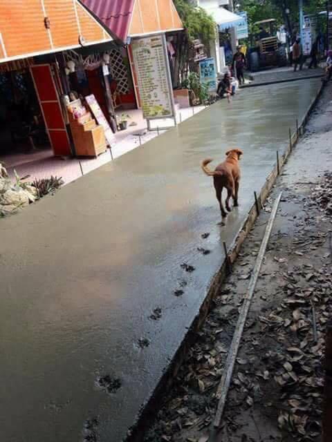 www.thai-dk.dk/uploads/hovsa467683135641.jpg